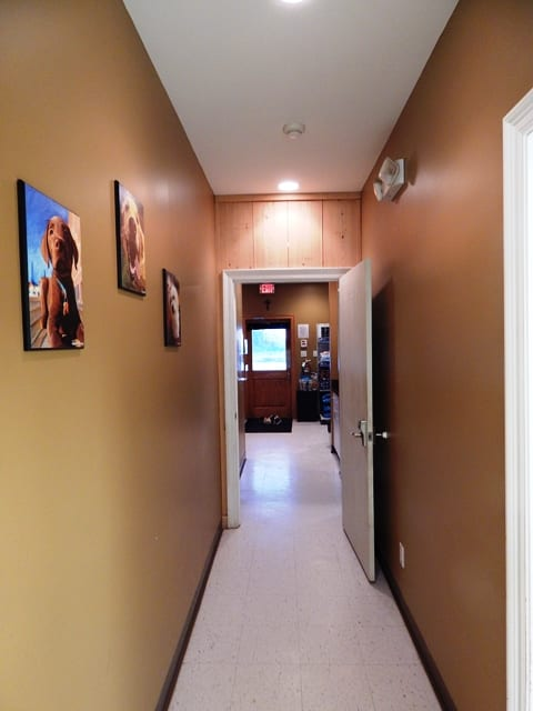 Hallway: Animal Hospital Tour in Maurice